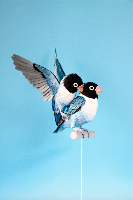 blue-masked-lovebird-male-and-female-2015