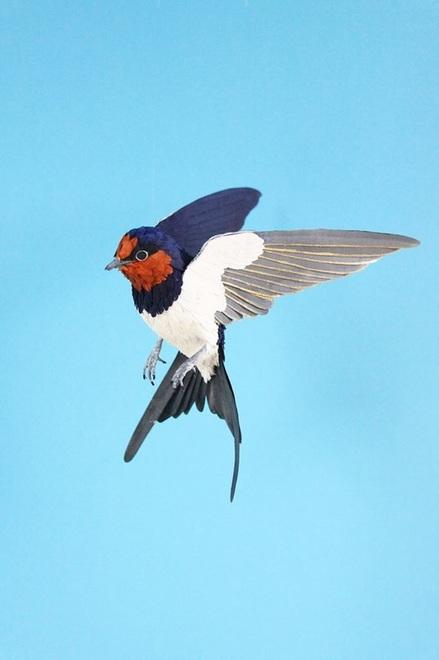common-swallow-2015