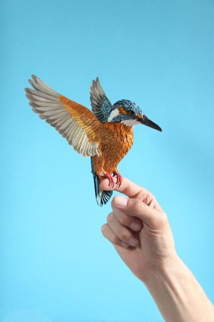 kingfisher-2015